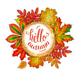 Lettering Hello Autumn. A frame made from wheat ears and autumn leaves are oak, birch, mountain ash, maple and chestnut. Handwritten inscription - Hello Autumn Royalty Free Stock Image