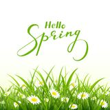 Lettering Hello Spring and nature background with grass. Lettering Hello Spring with grass and flowers on white background, illustration Stock Photography