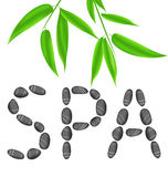 Lettering spa with bamboo leaves Stock Images