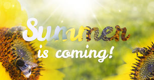 Free Lettering Summer Is Coming With Sunflowers Royalty Free Stock Image - 72850456