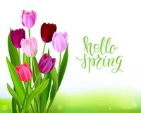 Lettering Tulip spring banner Royalty Free Stock Images
