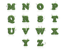 Letters M - Z of green ivy leaves with reflection Royalty Free Stock Image