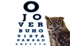 Letters owl eye doctor's office Royalty Free Stock Photos
