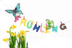 Letters saying spring with butterflies next to daffodil. Letters on a clothes line forming the german word Frühling(spring) next to butterflies and daffodil Stock Image