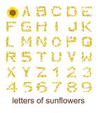 Letters of sunflowers. An image with some colorful letters of sunflowers Stock Photos