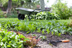letti del giardino con giovani erbe fresche Fotografie Stock