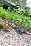 letti del giardino con giovani erbe fresche Fotografia Stock