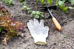 letti del giardino con giovani erbe fresche Immagine Stock Libera da Diritti