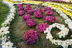 Letti di fiore con i crisantemi variopinti Parco a Kiev, Ucraina Fotografia Stock Libera da Diritti