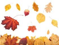 Lettiera della foglia e foglie di autunno di caduta isolate Fotografia Stock Libera da Diritti