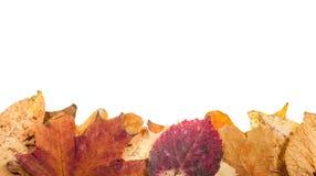 Lettiera della foglia e foglie di cui sopra dello spazio isolate Fotografia Stock Libera da Diritti