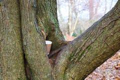Lettiera nel tronco di albero Immagine Stock