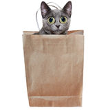 Letting the cat out of the bag. Silver cat in a a brown paper shopping bag on white royalty free stock image