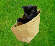 Letting the cat out of the bag. Business Metaphor for spilling the beens Royalty Free Stock Images