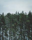 Lettische Wälder Stockfotos