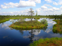 Lettisches Sumpfland: See und Insel Stockfotos
