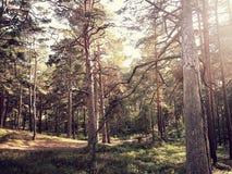 Lettisk natur Royaltyfria Bilder
