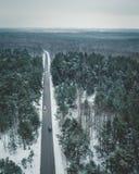 Lettiska skogar Royaltyfri Bild
