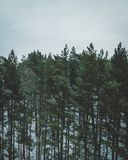 Lettiska skogar Arkivfoton