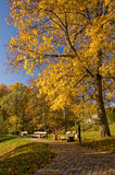 Lettiskt landskap Royaltyfria Bilder