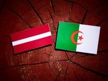 Lettland flagga med den algeriska flaggan på en isolerad trädstubbe Arkivbilder
