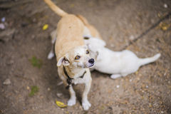 Lettle dog nursing puppy Stock Image