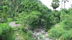 Letto asciutto nelle montagne sull'isola indù di Bali Foresta non riscaldata senza intervento umano Vegetazione fertile in giungl immagine stock libera da diritti