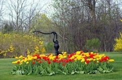Letto Colourful dei tulipani Immagine Stock Libera da Diritti