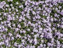 Letto dei fiori luminoso in primavera Immagine Stock