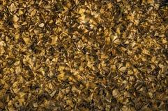 Letto delle foglie in autunno Immagini Stock