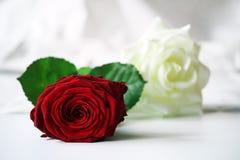 Letto delle rose Immagine Stock