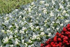 Letto di estate del fiore in un giardino Immagine Stock