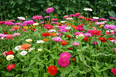 Letto di fiore Immagini Stock Libere da Diritti