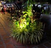 Letto di fiore all'aperto con le piante tropicali, piante ornamentali illuminate dalle iluminazioni pubbliche fotografia stock