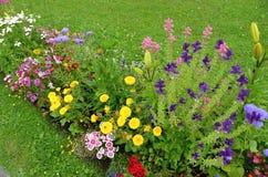Letto di fiore colorato in primavera Fotografia Stock Libera da Diritti