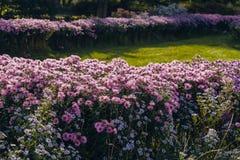 Letto di fiore con i fiori colourful luminosi in giardino botanico fotografia stock