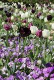 Letto di fiore con i tulipani Fotografia Stock