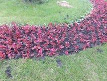 Letto di fiore della città con le piante rosse Fotografie Stock Libere da Diritti