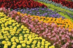 Letto di fiore di colore Tavolozza di estate Immagini Stock
