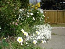 Letto di fiore esile Fotografia Stock