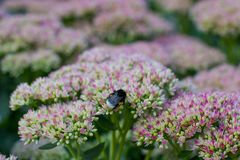 Letto di fiore di estate con i fiori fotografie stock