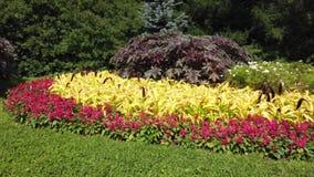 Letto di fiore rosso in giardini