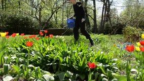 Letto di fiore stanco di sarchiatura della ragazza del giardiniere in primavera stock footage