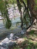 Letto di fiumi fotografia stock