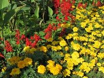 Letto di Flover con i fiori Fotografie Stock