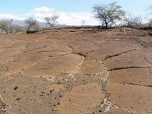 Letto di lava con le sculture hawaiane indigene del petroglifo Fotografia Stock Libera da Diritti