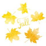 Lettrage de chute et feuilles jaunes d'érable Photos stock