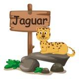 Lettre animale J d'alphabet pour le jaguar Image libre de droits