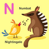 Lettre animale N-Numbat, Nightingal d'alphabet d'isolement par illustration illustration de vecteur