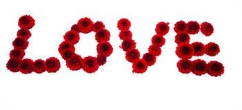 Lettre d'amour des fleurs de dahlia d'isolement Photographie stock